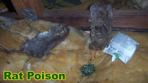 most effective poison how to poison rats effectively