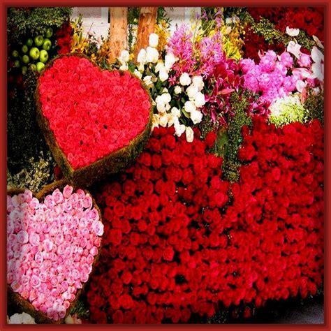 imagenes de rosas rojas hermosas rosas rojas de amor related keywords rosas rojas de amor