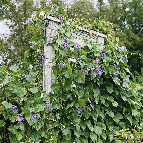 vines for trellis 17 best upcycled trellis ideas for garden cool trellis