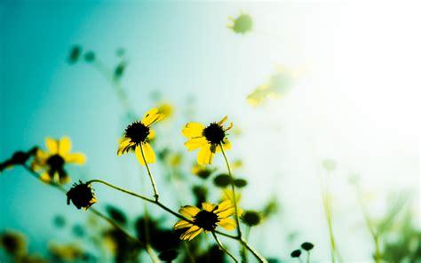 yellow flowers zoom image wallpaper wallpaperlepi