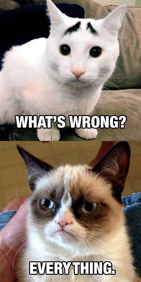 Whats Wrong Meme - cat memes funny memes