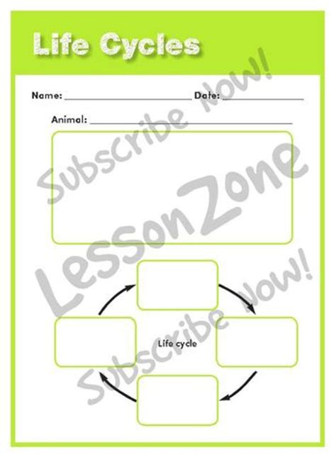 cassowary cycle diagram bilby cycle diagram best free home design idea