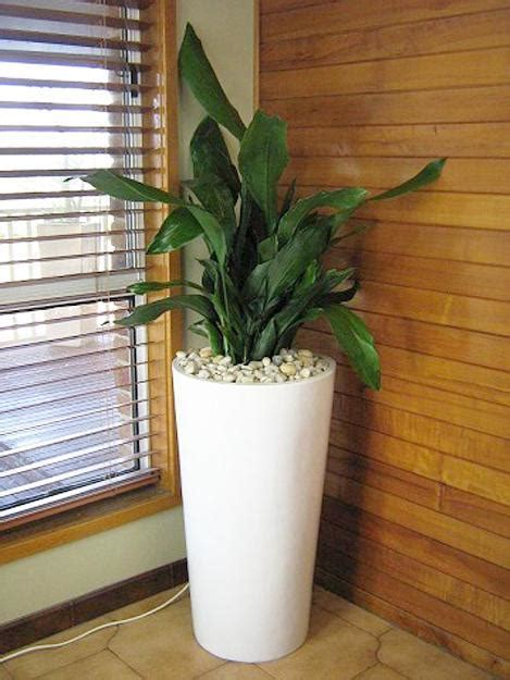 modern houseplants green ideas for your home interiors decorating with indoor plants modern room indoor and plants