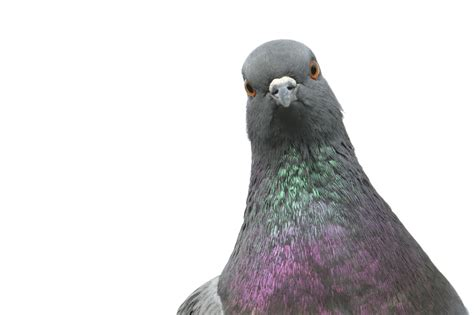 electrocuted pigeon causes terror scare at paris gare du