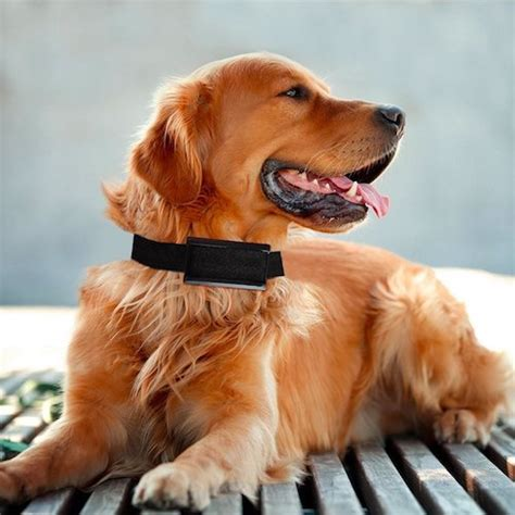 bark collar for large dogs top 10 best no bark collars for sale in 2018 reviews topbestspec