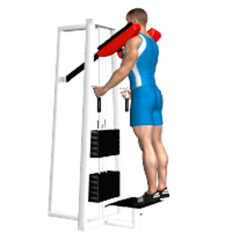 calf machine seduto esercizi polpacci i migliori esercizi per allenare polpacci