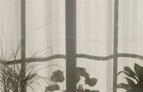 images silhouette plant pattern  shadow