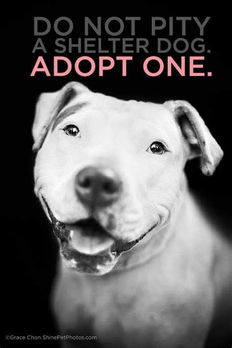 adopt a puppy do not pity a shelter adopt one pet adoption inspiration this