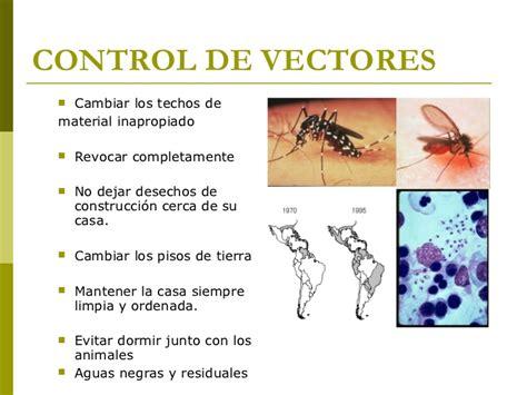 imagenes de vectores transmisores de enfermedades enfermedades transmitidas por vectores 1