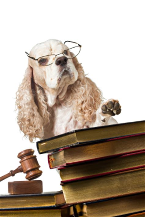 selling puppies laws courts increase dogs value the my four dogs