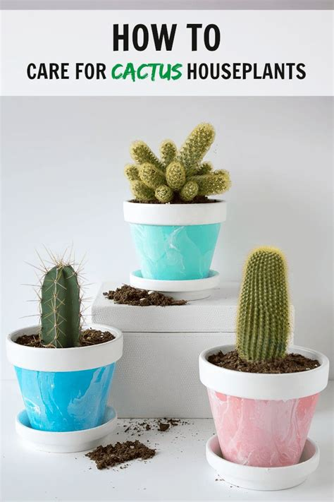 easy to care for indoor plants 25 best ideas about indoor cactus on pinterest cactus