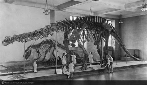 dinosaurs with special reference to the american museum collections books amnh digital special collections children viewing