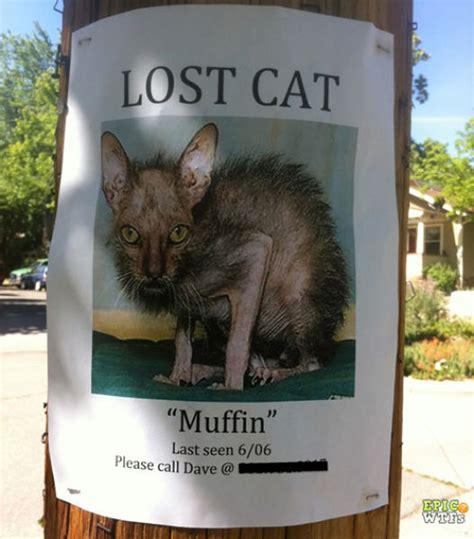 Missing Cat Meme - wtf pictures compilation part 6 50 pics izismile com
