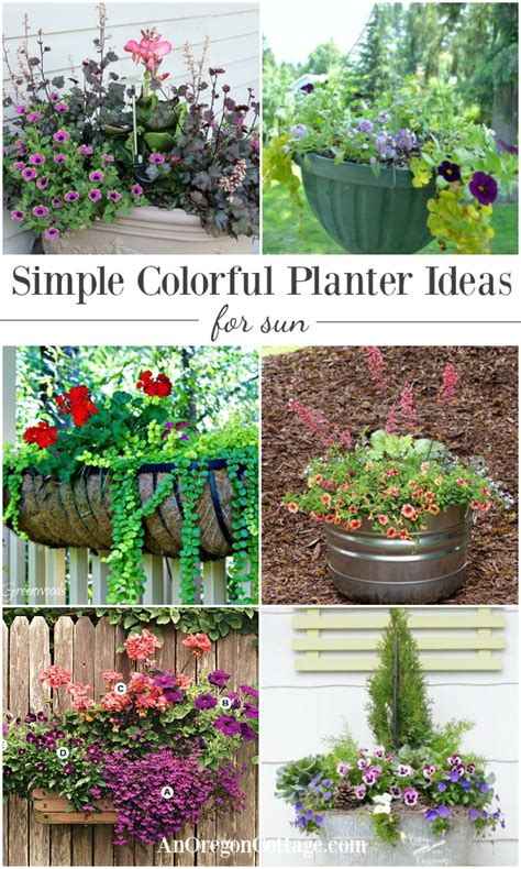 Planter Ideas Sun by Simple Colorful Planter Ideas For Sun