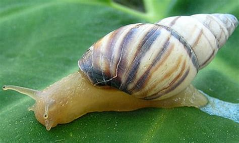 Snail L by Snail Meaning And Interpretations Stop