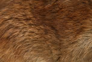 animal skin textures definition