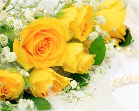 imagenes de flores y rosas image gallery rosas amarillas