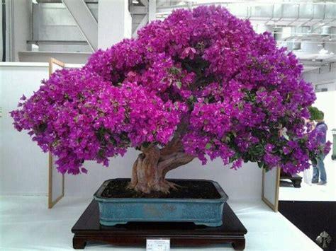 bonsai con fiori top 10 bonsai con i fiori bonsai empire