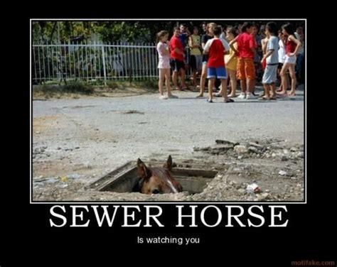 funny horse memes 13 pics