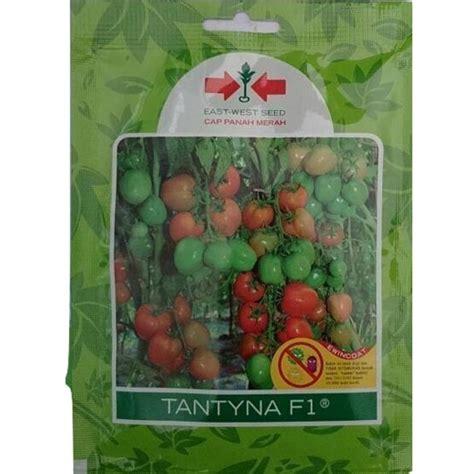 Benih Benih Tomat F1 Paket Tanaman Buah Sayuran Mini Garden benih panah merah tomat tantyna f1 150 biji jual tanaman hias
