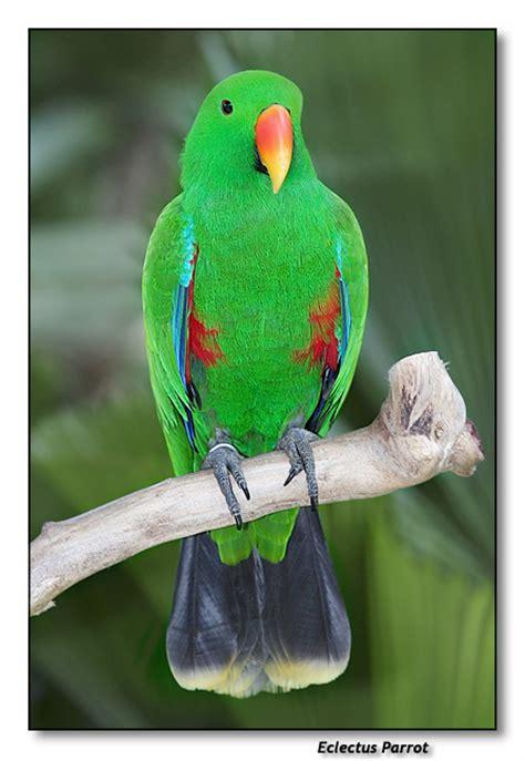 imagenes animales aves im 225 genes de animales como aves imagui