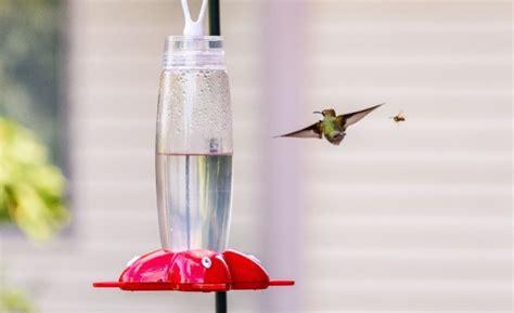 keeping bees away from a hummingbird feeder thriftyfun