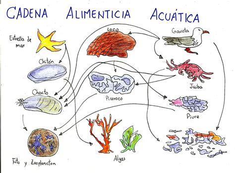 cadenas alimenticias y acuaticas cadena alimenticia acuatica imagui