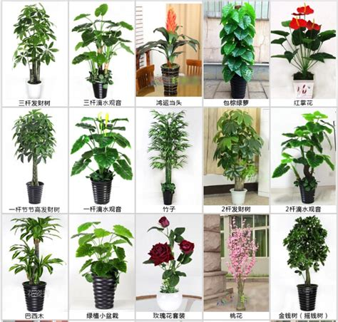 types of indoor plants indoor types of evergreen ornamental plants artificial