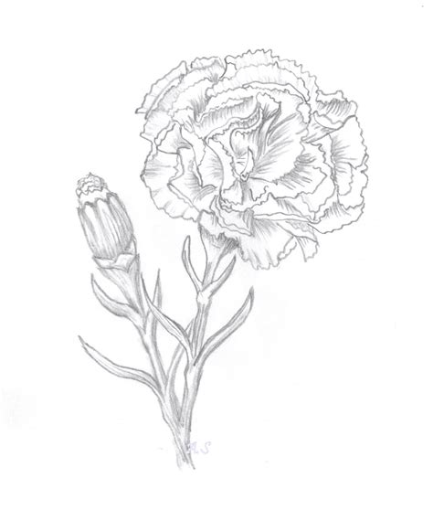 carnation tattoo carnation papercraft