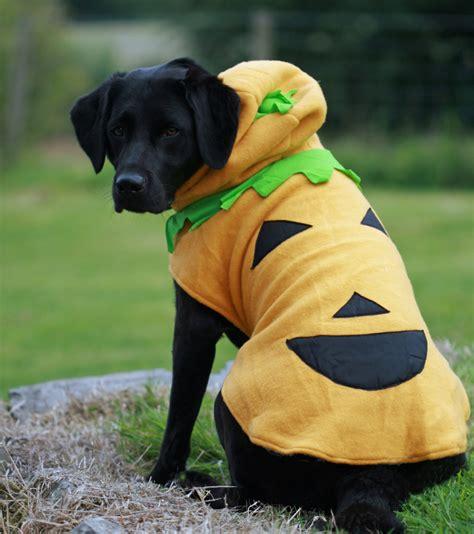 halloween costumes  big dog breeds  small dog breeds