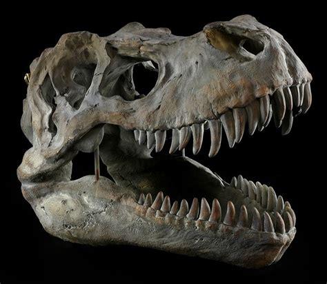 dinosaurier schlafzimmer accessoires totenkopf tyrannosaurus rex mittel fossil dino t rex