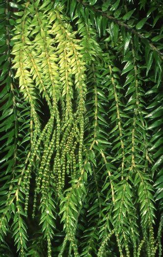 ferns wet tropics management authority