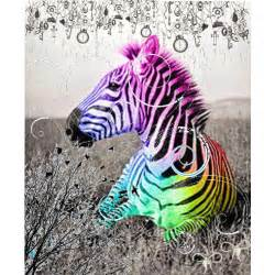 colorful zebra animal 09 10 11