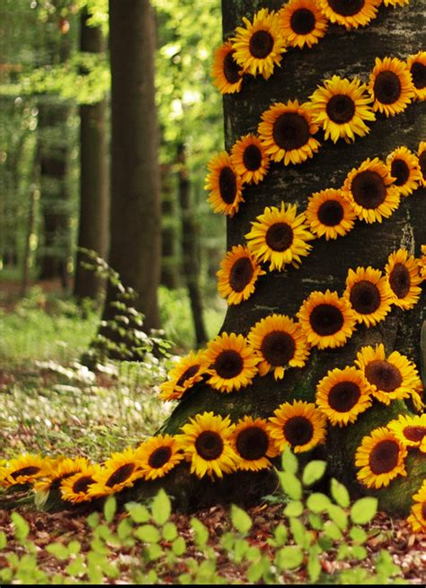 imagenes hermosas girasoles girasoles flores pinterest girasoles flores y fondos