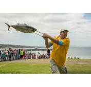 Tuna Tossers In South Australia For The Annual Fish