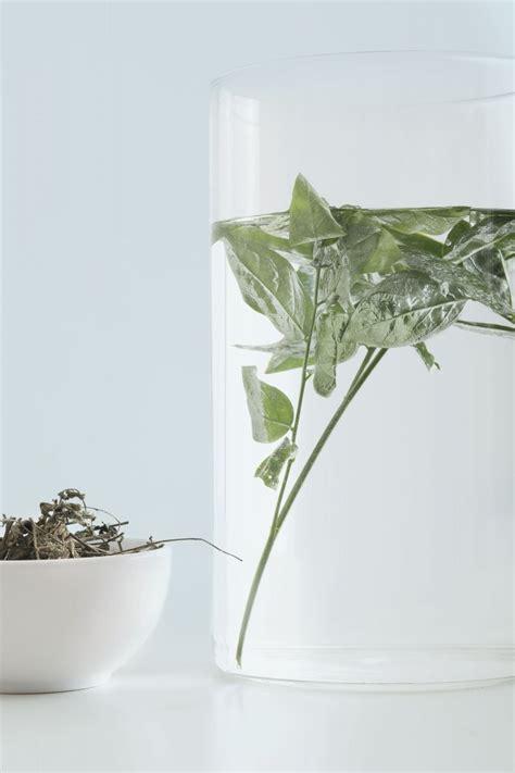 Daun Katuk 120 Kapsul Berkualitas herbana relief sari daun katuk herbana