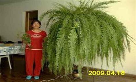 cuidado plantas interior plantas de interior de casa para decorar