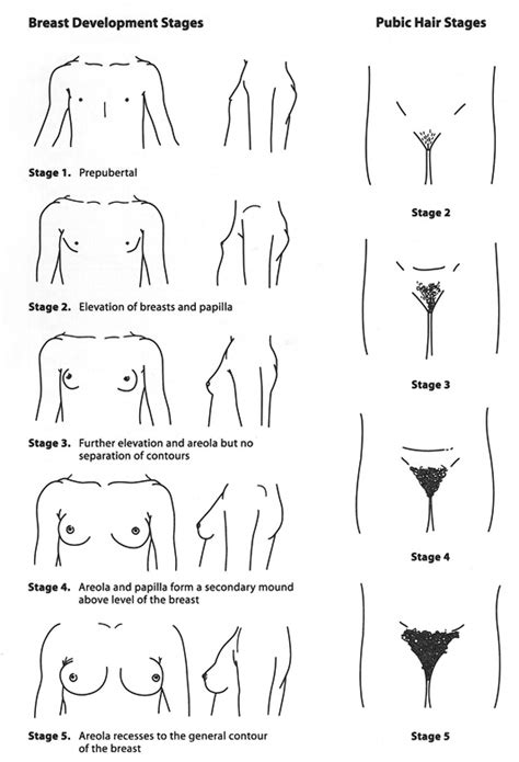 acceptable male pubic hair length gastroenterology and clinical nutrition growth charts