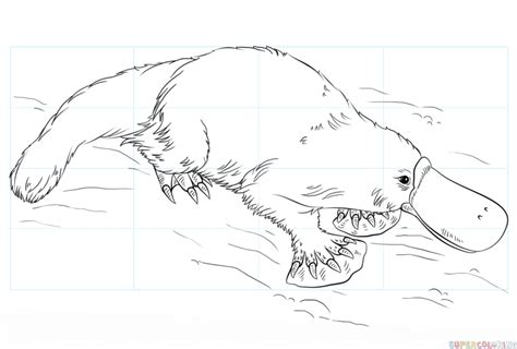How To Draw A Platypus Step By Step Drawing Tutorials Platypus Coloring Page