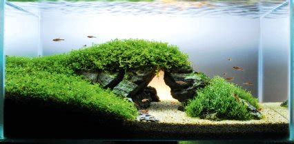 aquascape environmental the benefits and basics of setting up a naturally planted