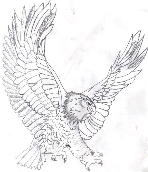 eagle coloring page free free printable bald eagle coloring pages for kids