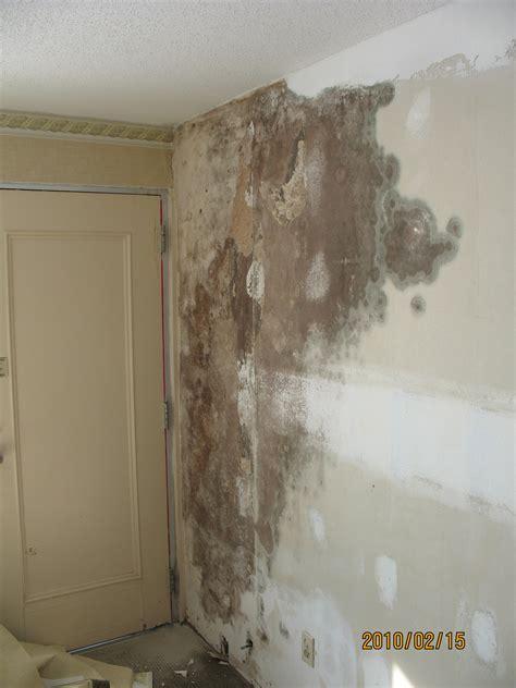 wallpaper black mould mold under wallpaper wallpapersafari