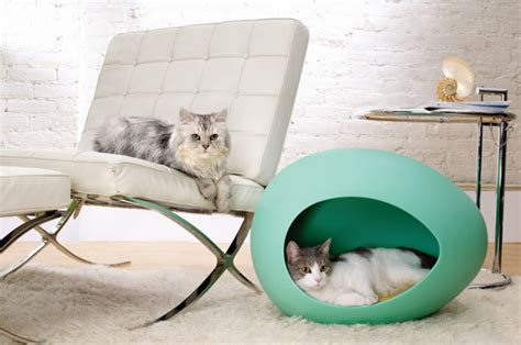 cat pods pei pod for cats and dogs at home with kim vallee