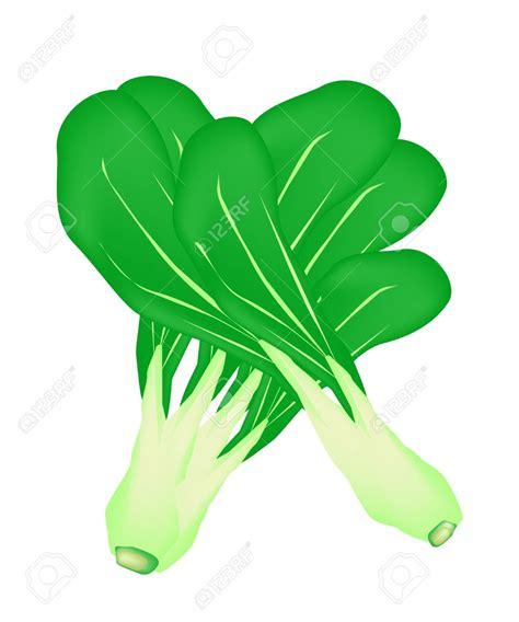 fresh clipart green vegetable pencil and in color fresh