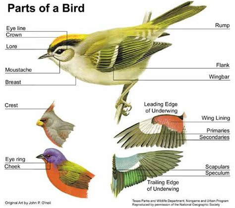bird external anatomy ornithology