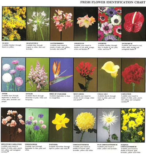 garden flower identification 28 images our plot at