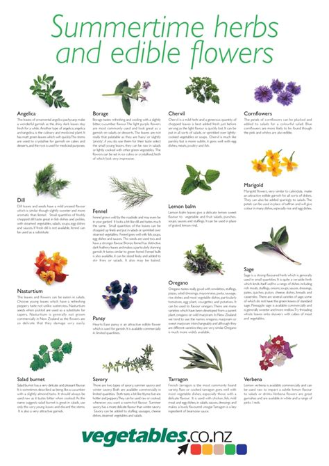 printable list of edible flowers 108 best images about spices on pinterest food tips