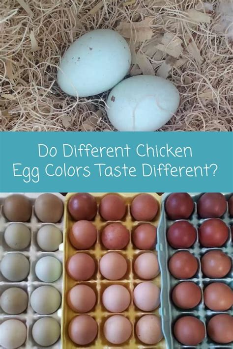 why are eggs different colors do different chicken egg colors taste different