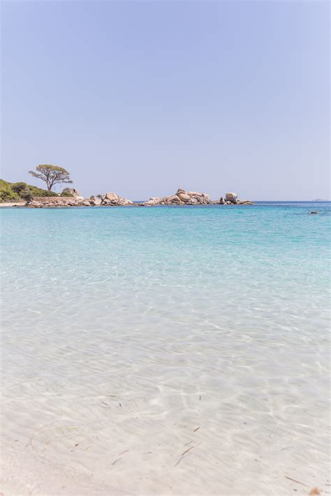 in corsica beaches be like in corsica the lionheaded