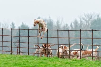 how to get a puppy to stop jumping stop jumping fence to escape behavior